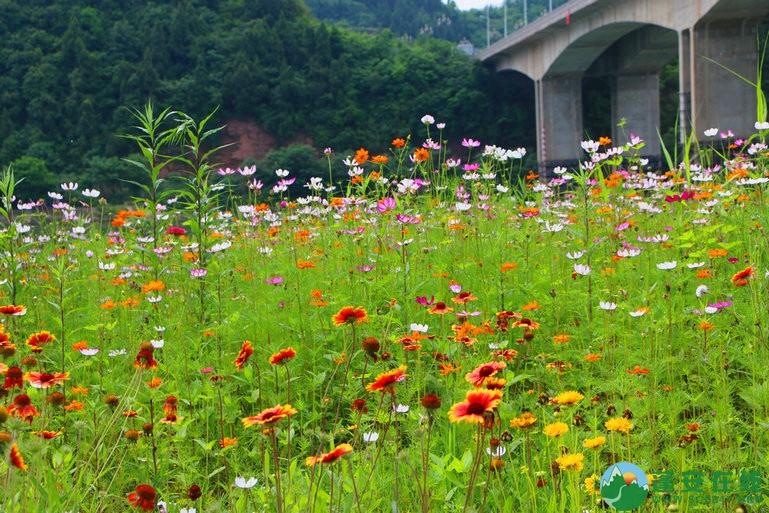 蓬安锦屏相如湖国家湿地公园夏景 - 第10张  | 蓬安在线