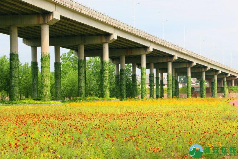 蓬安锦屏相如湖国家湿地公园夏景 - 第11张  | 蓬安在线