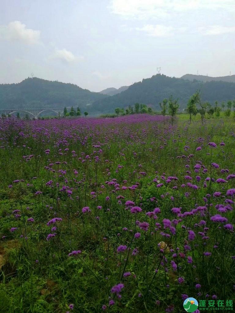 蓬安锦屏相如湖国家湿地公园夏景 - 第12张  | 蓬安在线