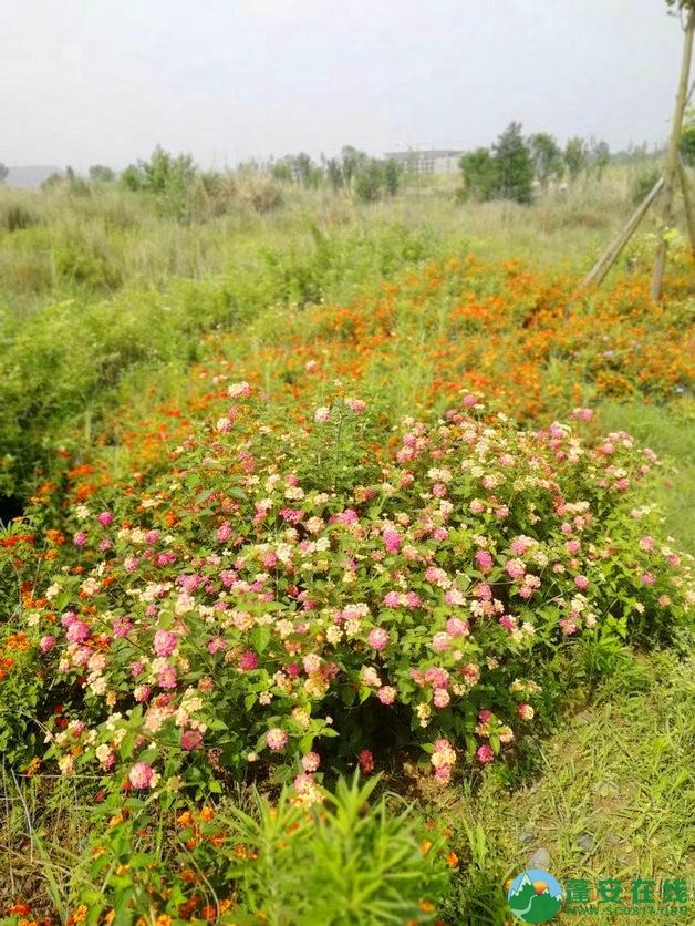 蓬安锦屏相如湖国家湿地公园夏景 - 第14张  | 蓬安在线