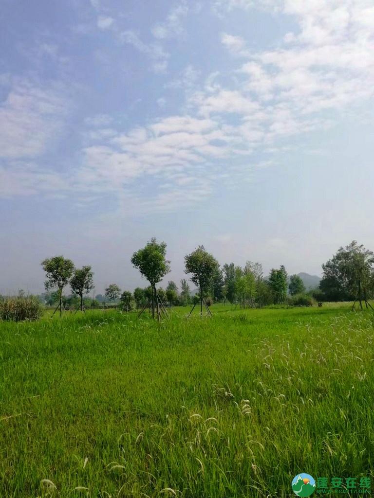蓬安锦屏相如湖国家湿地公园夏景 - 第15张  | 蓬安在线