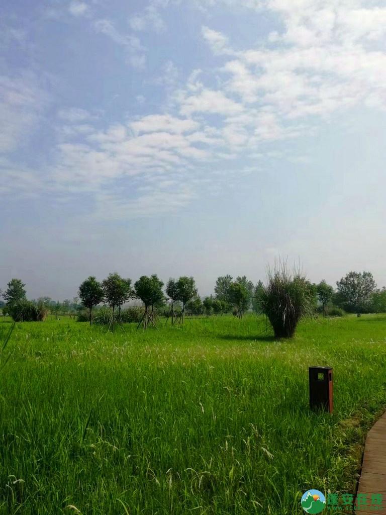 蓬安锦屏相如湖国家湿地公园夏景 - 第16张  | 蓬安在线