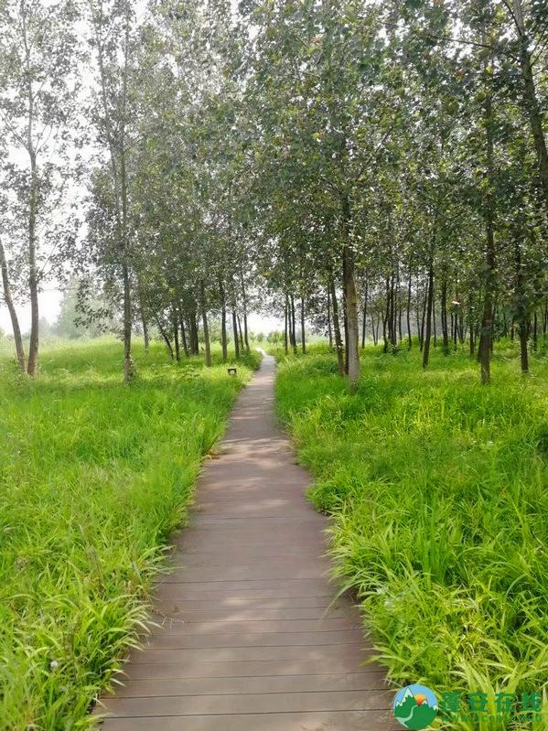 蓬安锦屏相如湖国家湿地公园夏景 - 第18张  | 蓬安在线