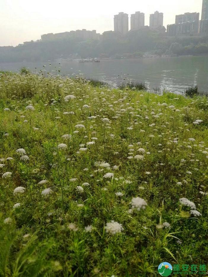 蓬安锦屏相如湖国家湿地公园夏景 - 第19张  | 蓬安在线