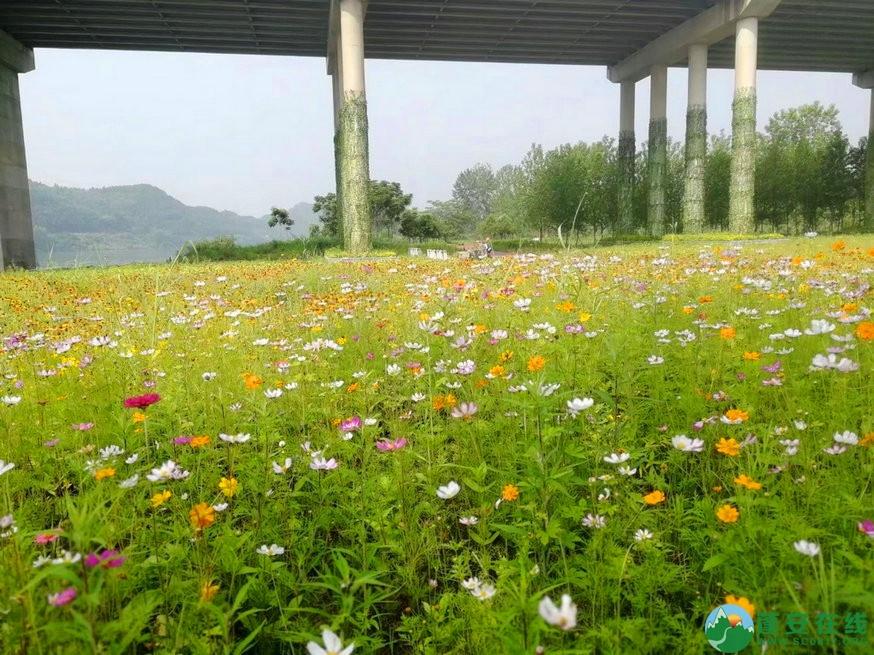 蓬安锦屏相如湖国家湿地公园夏景 - 第20张  | 蓬安在线