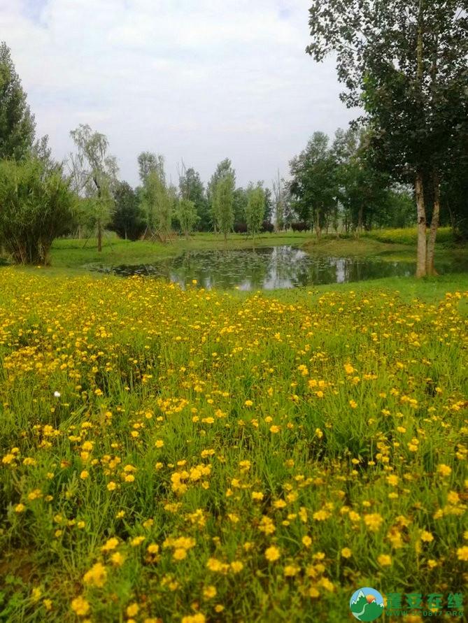 蓬安锦屏相如湖国家湿地公园夏景 - 第21张  | 蓬安在线