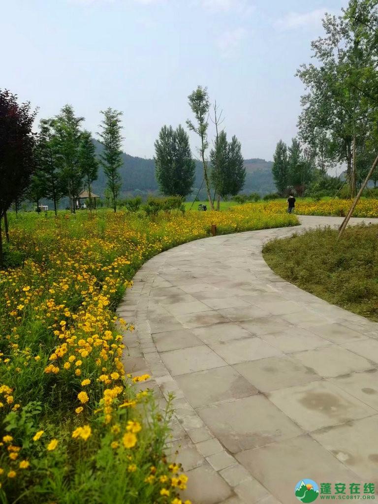 蓬安锦屏相如湖国家湿地公园夏景 - 第24张  | 蓬安在线