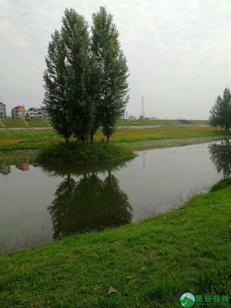 蓬安锦屏相如湖国家湿地公园夏景 - 第25张  | 蓬安在线