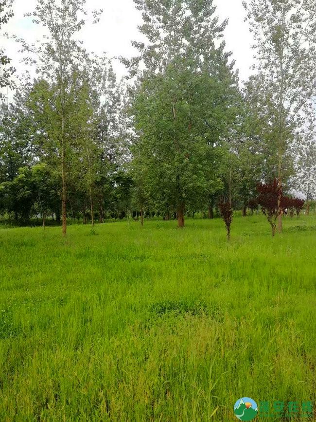 蓬安锦屏相如湖国家湿地公园夏景 - 第28张  | 蓬安在线
