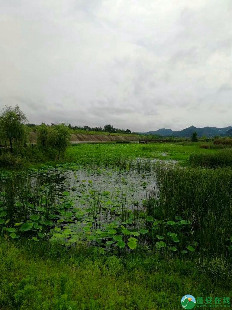 蓬安锦屏相如湖国家湿地公园夏景 - 第30张  | 蓬安在线