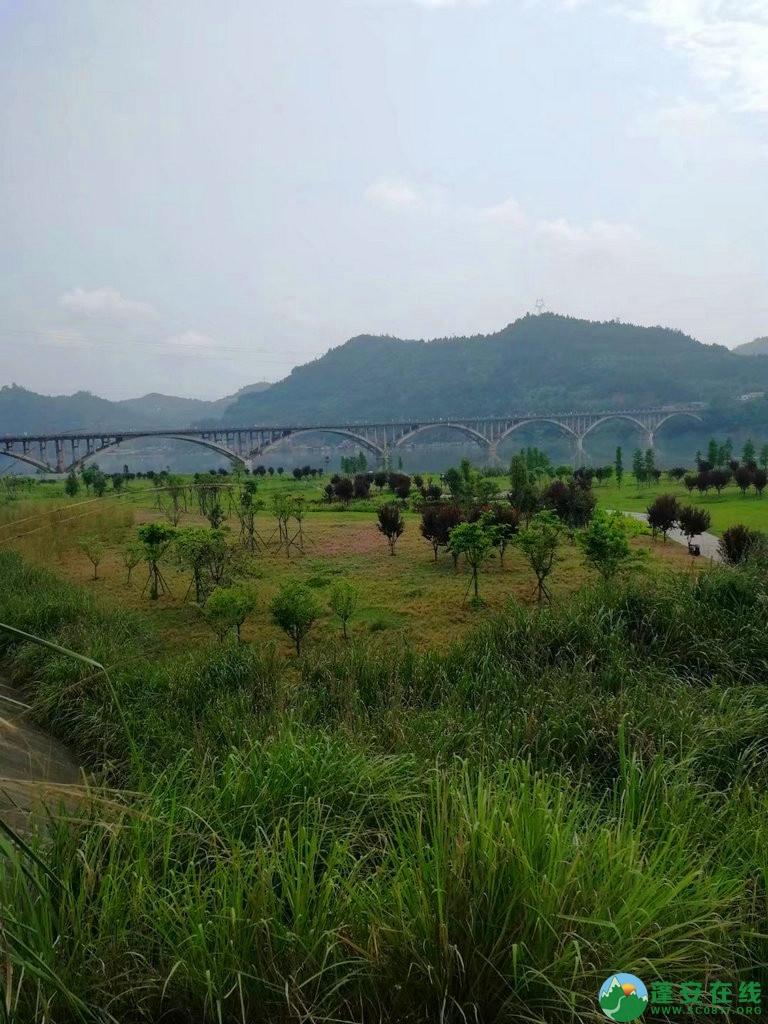 蓬安锦屏相如湖国家湿地公园夏景 - 第31张  | 蓬安在线