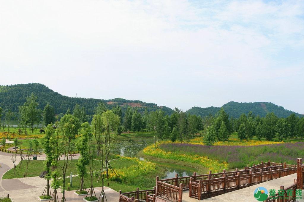 蓬安锦屏相如湖国家湿地公园夏景 - 第32张  | 蓬安在线