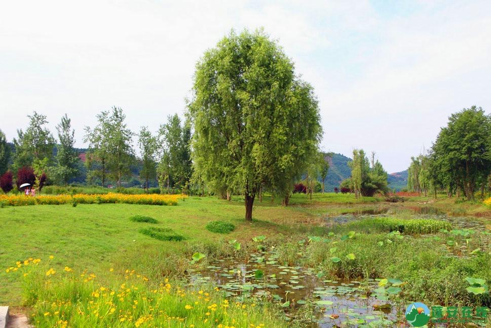 蓬安锦屏相如湖国家湿地公园夏景 - 第4张  | 蓬安在线