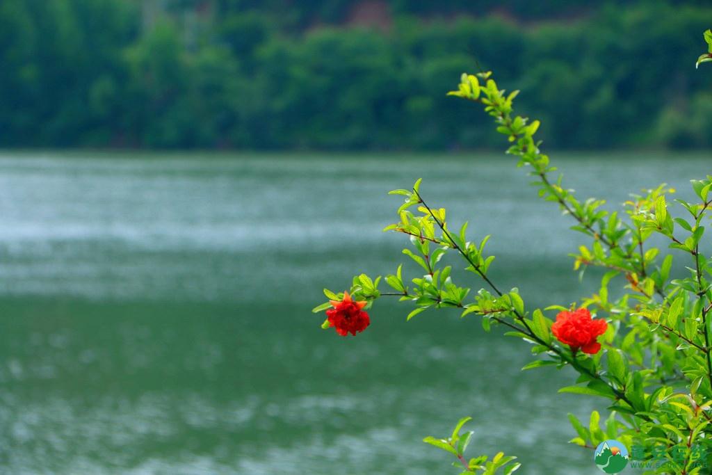 蓬安锦屏相如湖国家湿地公园夏景 - 第5张  | 蓬安在线