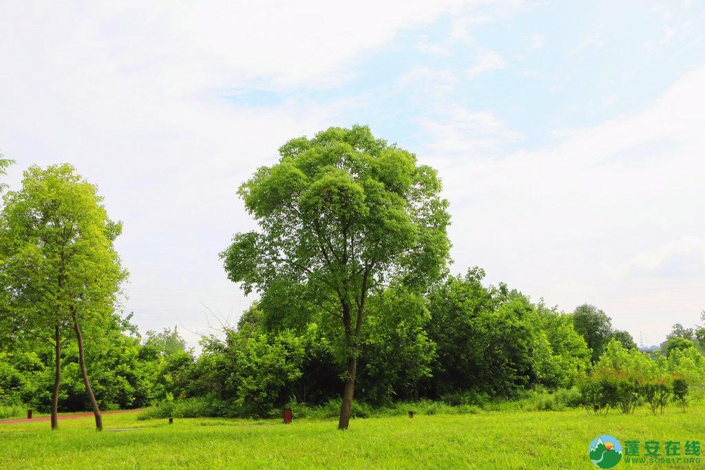 蓬安锦屏相如湖国家湿地公园夏景 - 第7张  | 蓬安在线