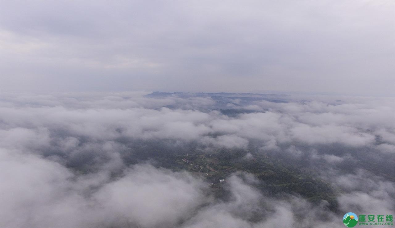 蓬安晨雾似云海 - 第3张  | 蓬安在线