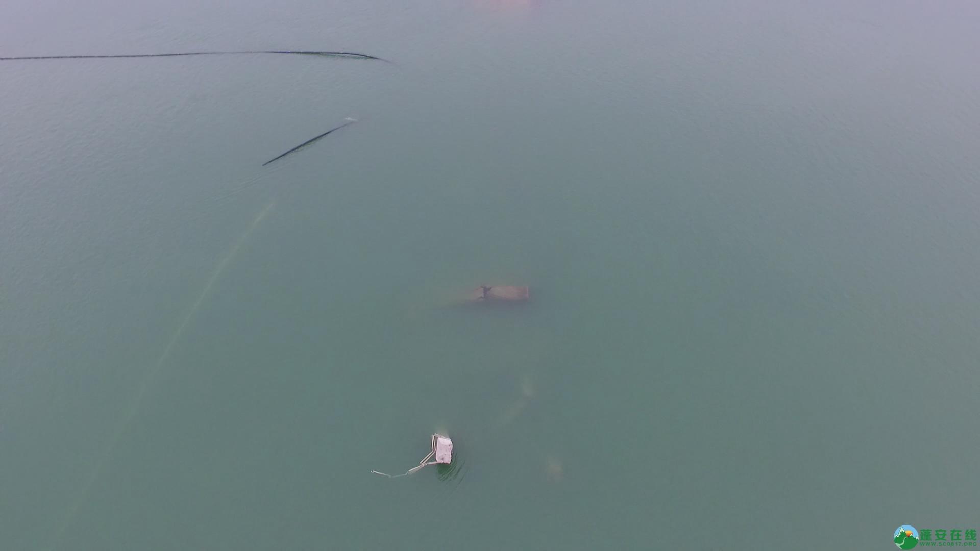 蓬安嘉陵江一桥成功爆破拆除 - 第8张  | 蓬安在线