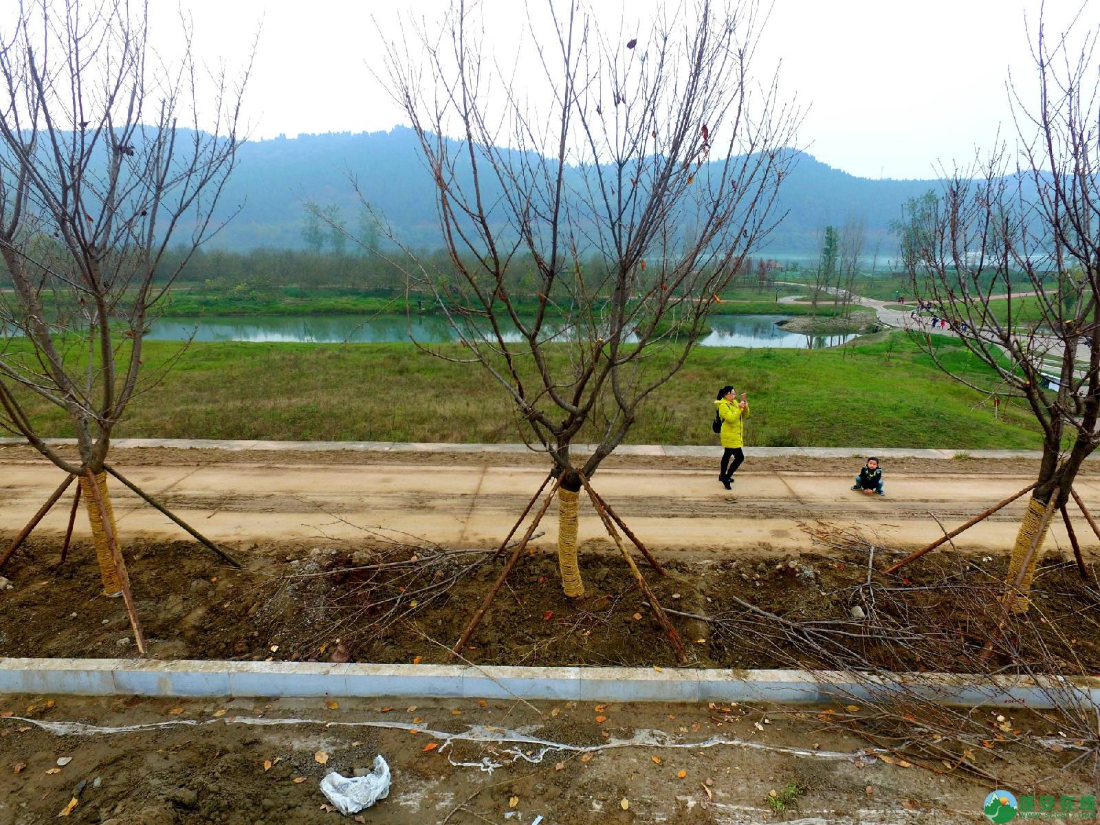 蓬安锦屏湿地公园嘉陵江跑道建设进度 - 第3张  | 蓬安在线