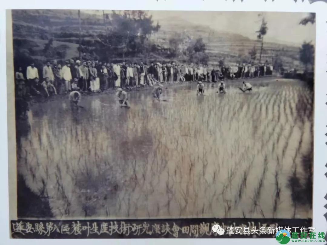 蓬安经典老照片 - 第23张  | 蓬安在线