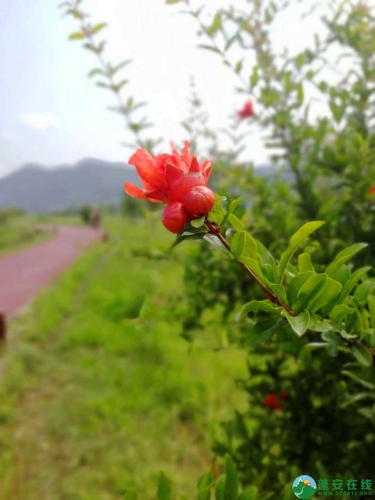 蓬安锦屏相如湖国家湿地公园夏景 - 第13张  | 蓬安在线