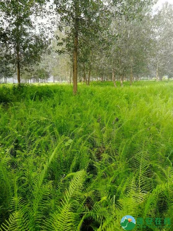 蓬安锦屏相如湖国家湿地公园夏景 - 第17张  | 蓬安在线