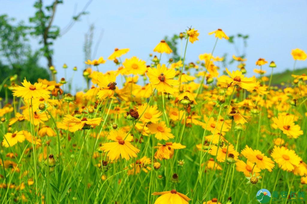 蓬安锦屏相如湖国家湿地公园夏景 - 第2张  | 蓬安在线