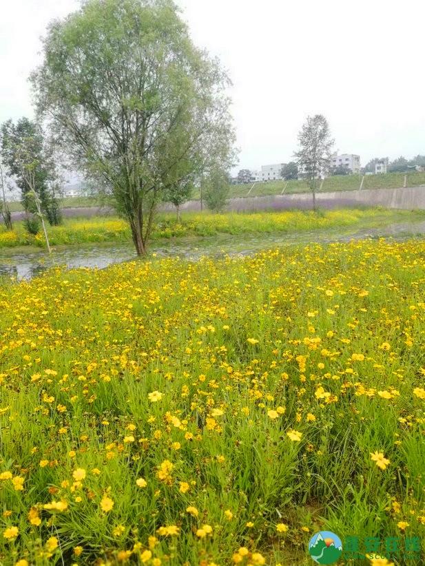 蓬安锦屏相如湖国家湿地公园夏景 - 第22张  | 蓬安在线