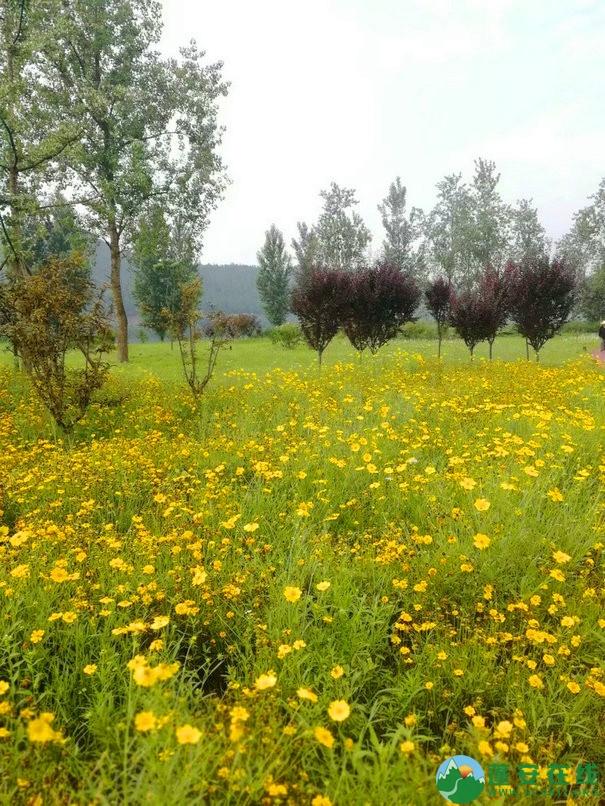 蓬安锦屏相如湖国家湿地公园夏景 - 第23张  | 蓬安在线