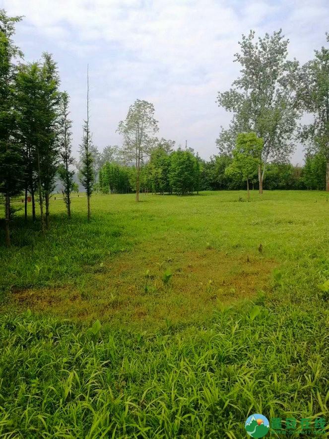 蓬安锦屏相如湖国家湿地公园夏景 - 第26张  | 蓬安在线