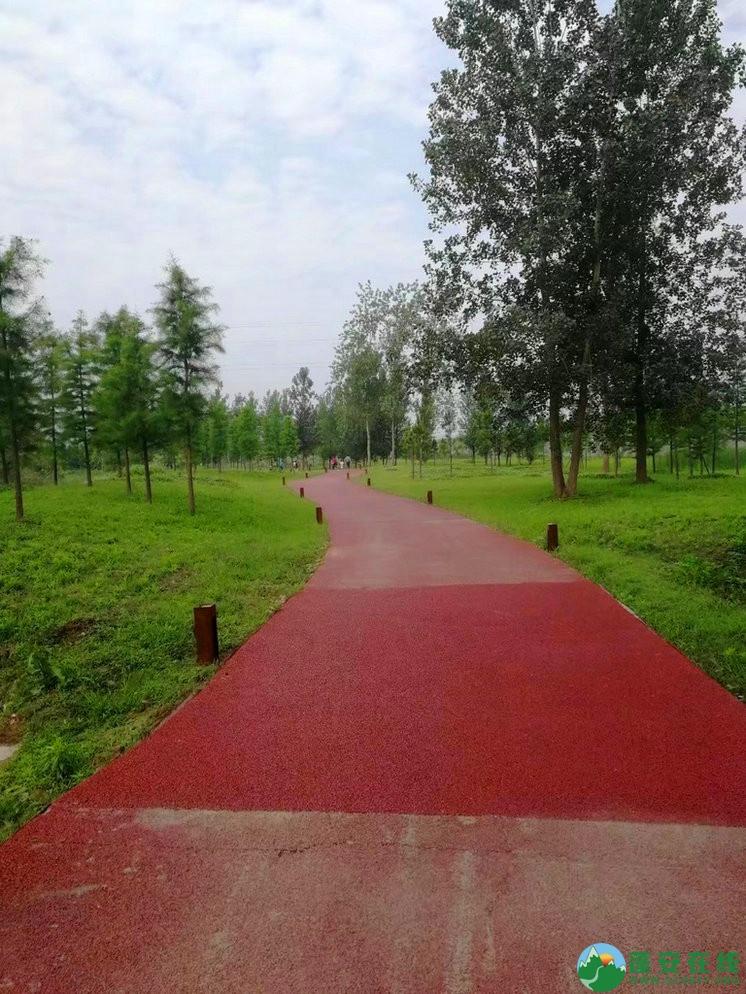 蓬安锦屏相如湖国家湿地公园夏景 - 第27张  | 蓬安在线