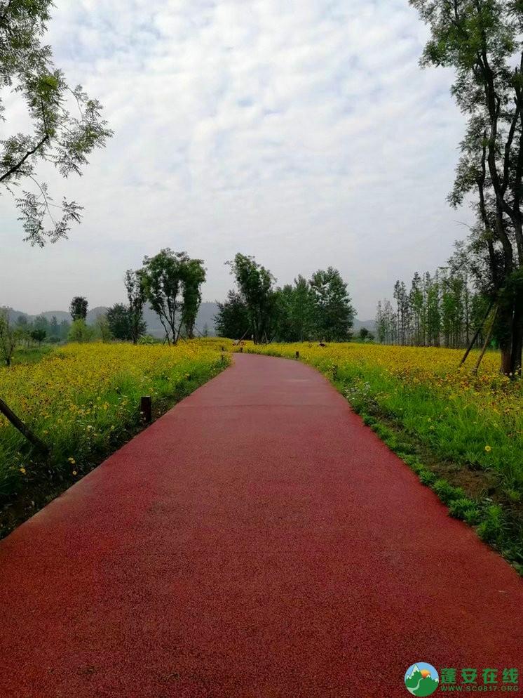 蓬安锦屏相如湖国家湿地公园夏景 - 第29张  | 蓬安在线