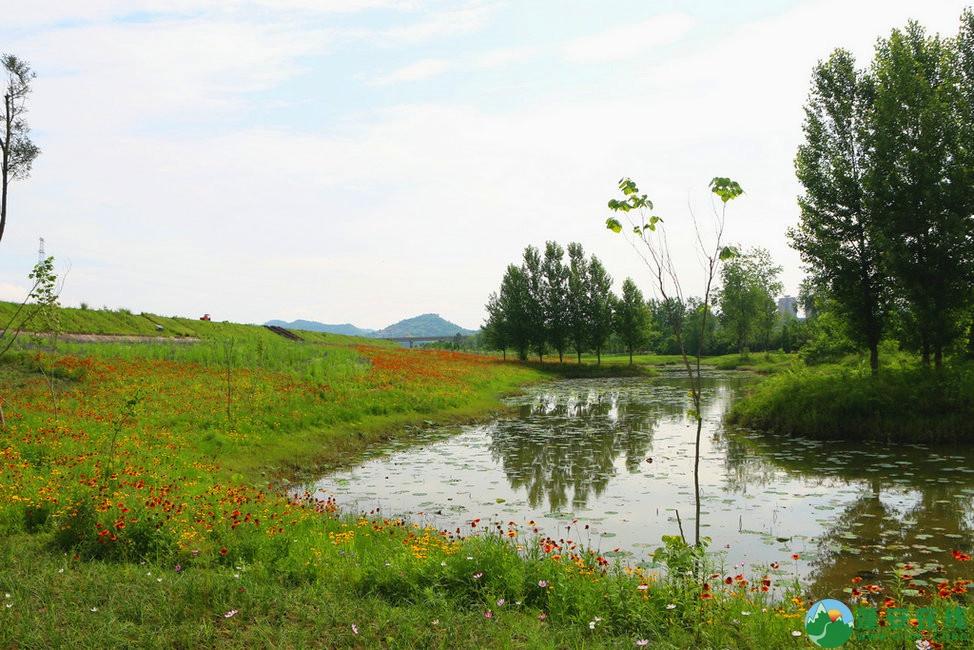 蓬安锦屏相如湖国家湿地公园夏景 - 第3张  | 蓬安在线