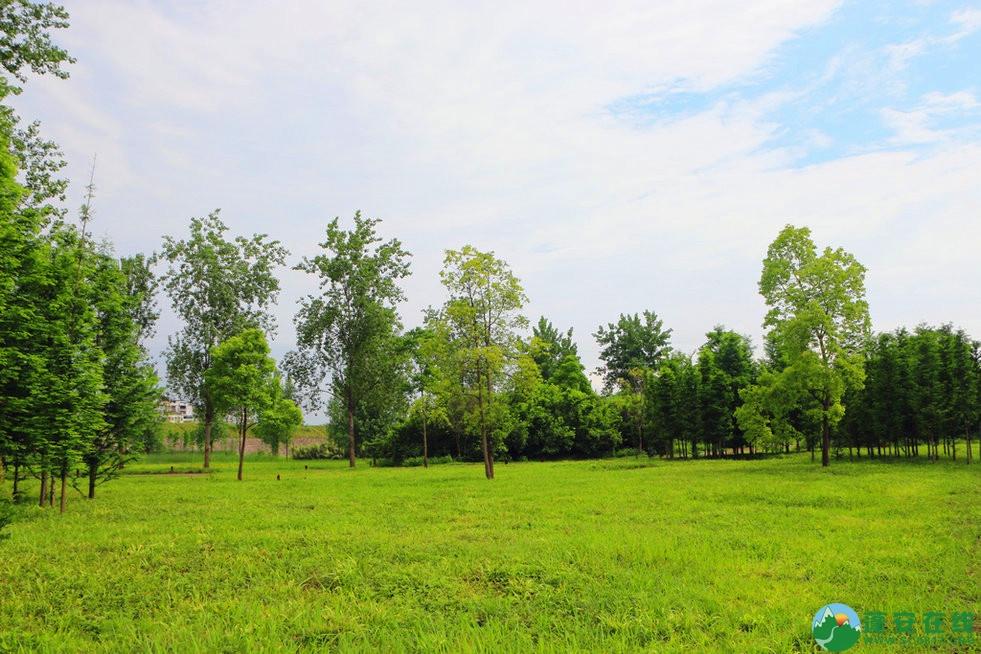 蓬安锦屏相如湖国家湿地公园夏景 - 第6张  | 蓬安在线