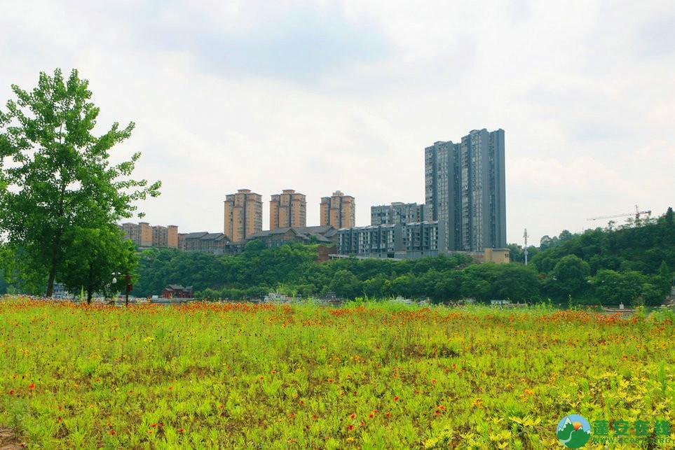 蓬安锦屏相如湖国家湿地公园夏景 - 第8张  | 蓬安在线