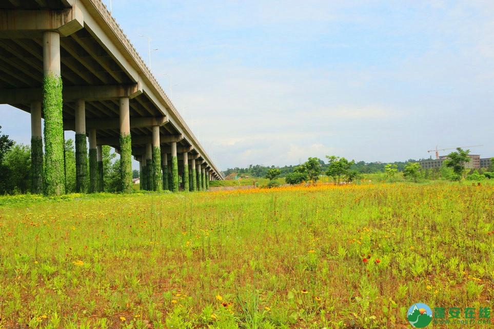 蓬安锦屏相如湖国家湿地公园夏景 - 第9张  | 蓬安在线