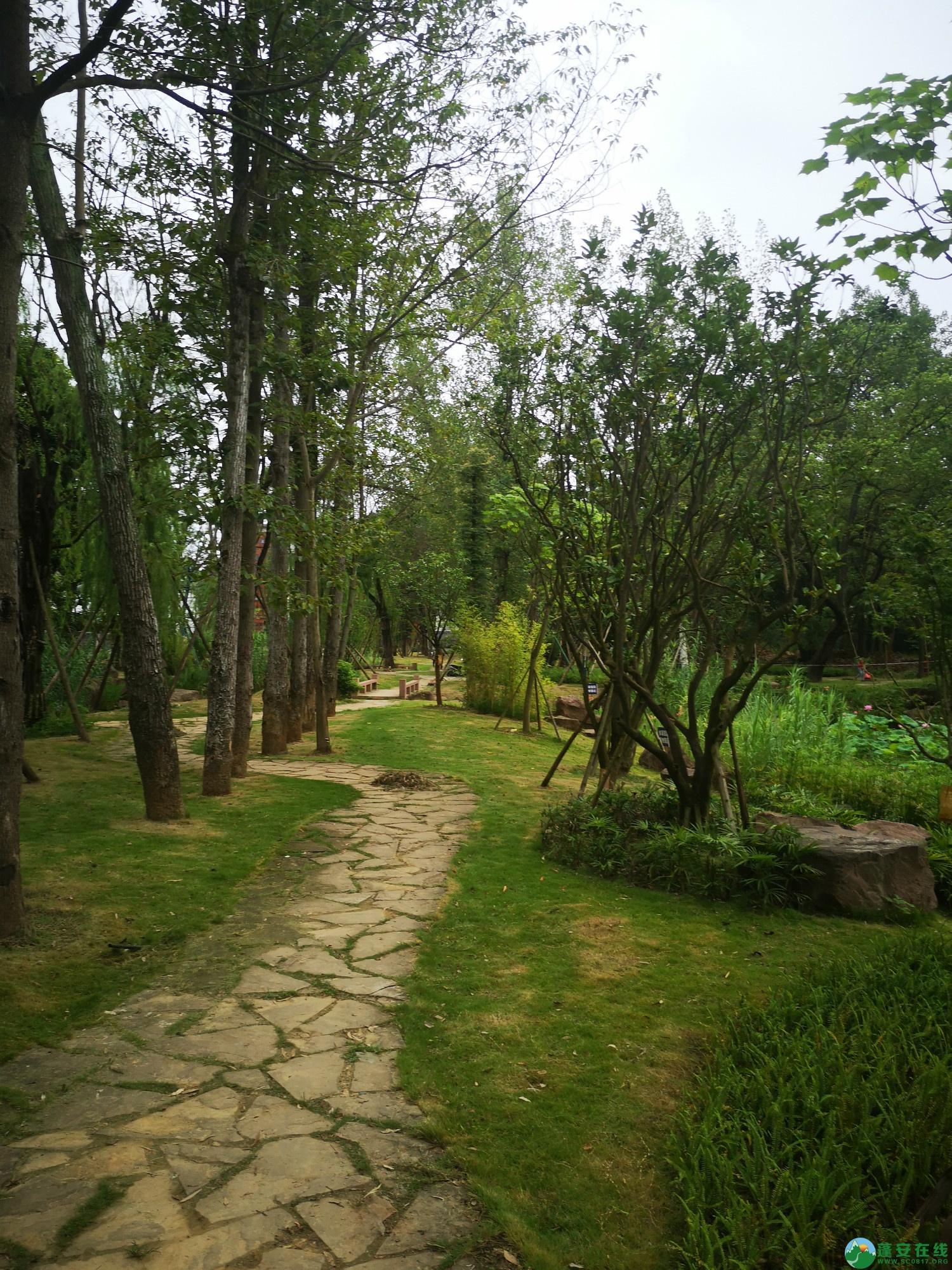 蓬安锦屏新区近况(2020-08-19) - 第12张  | 蓬安在线